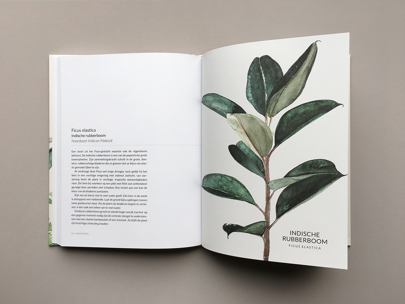 Groen-Geluk-Urban-Botanics